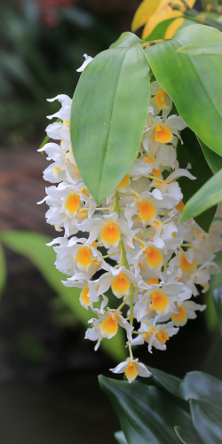 Orchidee achtigen geel