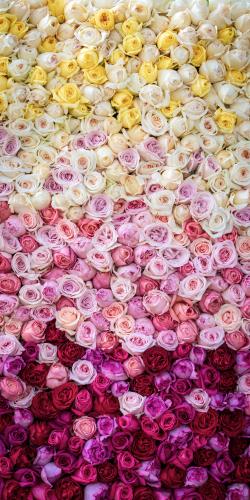 Rozen palet geel-roze-rood