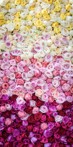 Rozen palet geel-roze-rood 2