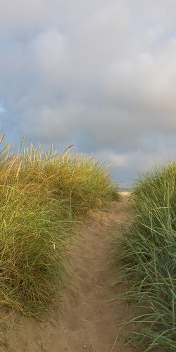 Pad door de duinen naar zee