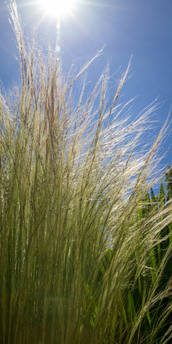Gras in de zon