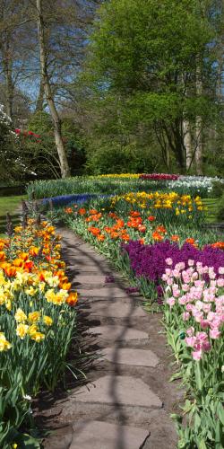 Pad door tulpen en narcissen