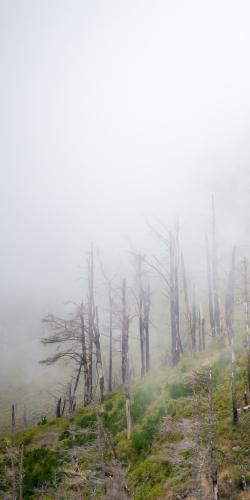 Heuvel in mist