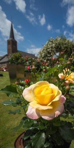 Kerk met gele roos