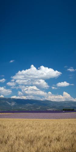 Lavendel en salie