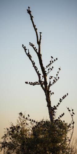 Vogels oostvaardersplassen