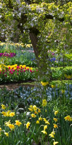 Bloemen diverse in park