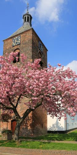 Kerk met bloesemboom