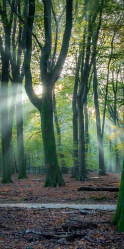 Zon door bomen