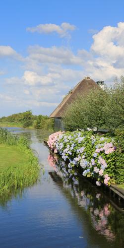 Hortensia loosdrechtse plassen