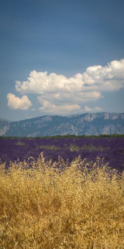 Lavendel met bergen 3