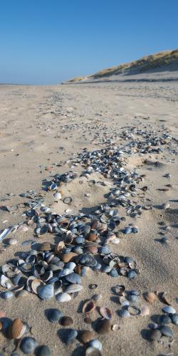 Schelpen op het strand