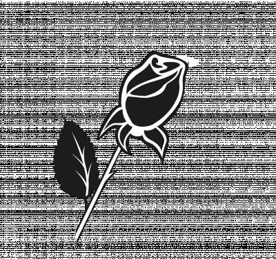 Roos 4